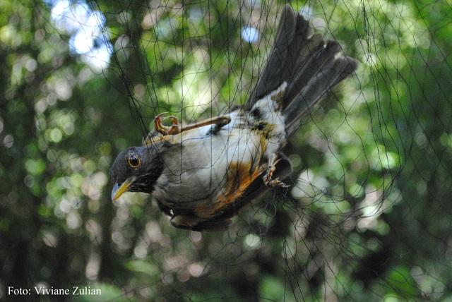 Pesquisadores encontram animais ameaçados de extinção