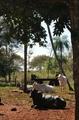Assentamento Rio Feio...