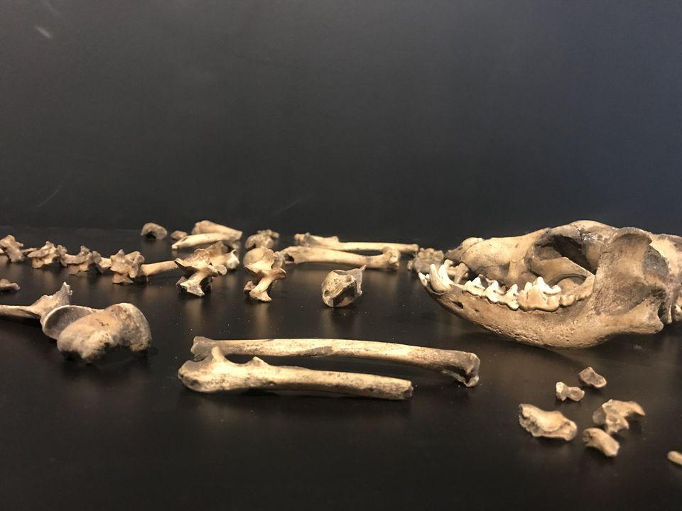 Ceom participa de novas pesquisas arqueológicas internacionais